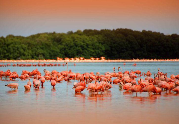 Celestún se encuentra a 95 km de la ciudad de Mérida.  (Playas de México).