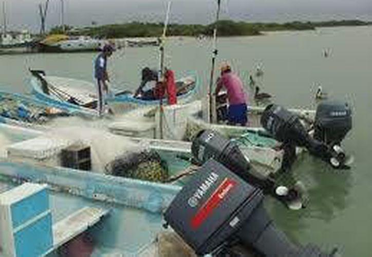 Se complica el panorama de pescadores de pulpo pues desde el inicio de su captura los volúmenes han sido realmente bajos. (Milenio Novedades)