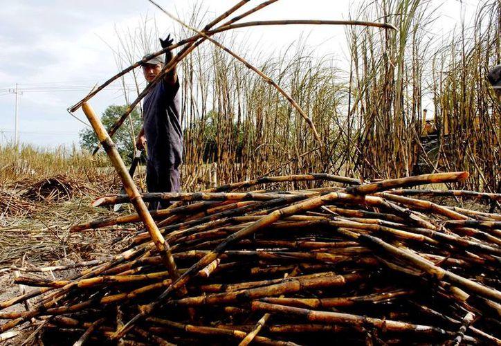 Productores cañeros de Quintana Roo deben pagar el IMSS a sus trabajadores. (Edgardo Rodríguez/SIPSE)