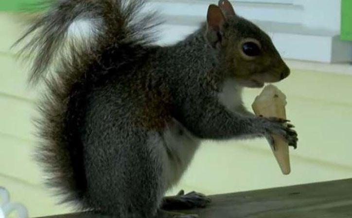 """""""Putter"""" es el nombre de la ardilla que ama el helado de vainilla. (Foto: AP)"""