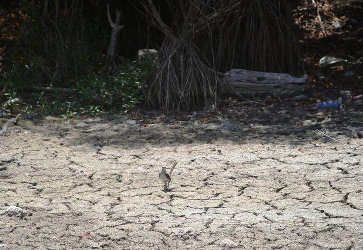 Comerciantes del lugar señalan que la basura siempre se acumula en la zona al término de los periodos vacacionales.  (Octavio Martínez/SIPSE)