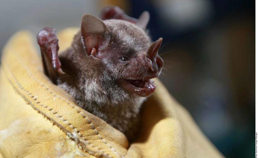 La información disponible sugiere que el nuevo coronavirus se originó en murciélagos a finales del año pasado en China, asegura la OMS. (Foto: Archivo Reforma).