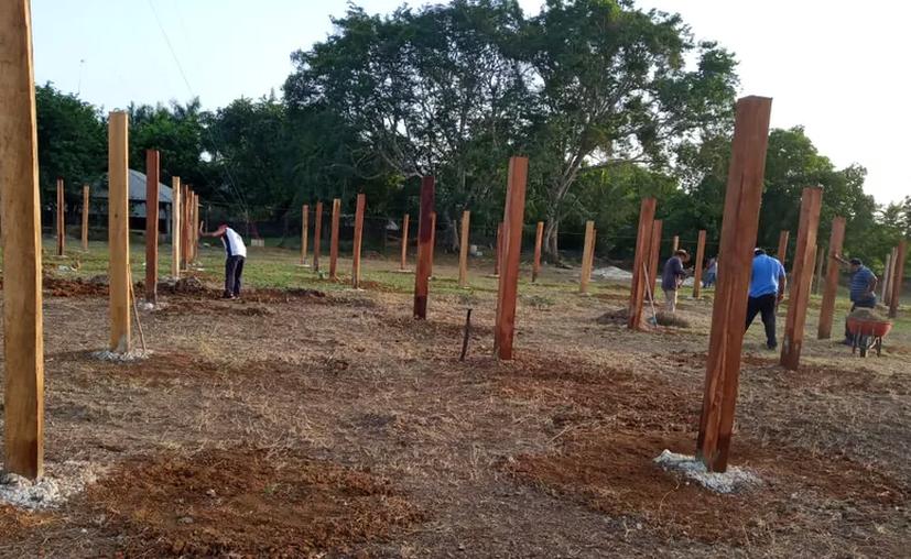 Sobre las parcelas replantadas, se señala que no hay garantía de que los agricultores puedan cosecharlas. (Foto: Carlos Castillo/Sipse)