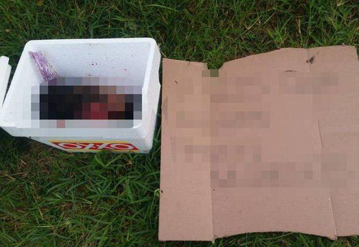 El mensaje dejado junto a la cabeza y el cuerpo, son el mismo, indicaron las autoridades. (Internet)