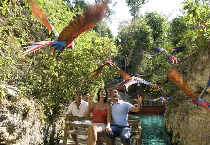 Los quintanarroenses que voten y se presenten antes del mediodía en Xcaret el 5 de junio podrán ingresar gratis al parque. (Israel Leal/SIPSE)