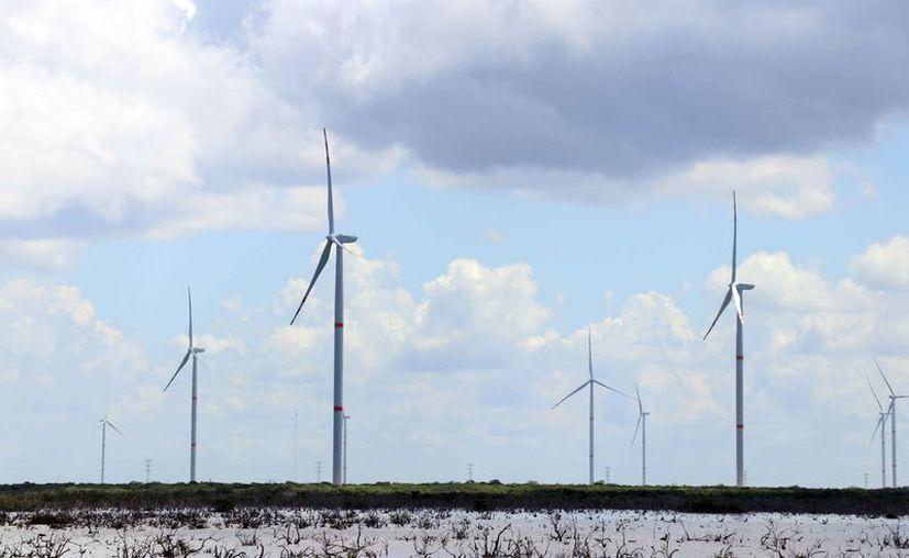 Tizimin y Dzilam de Bravo son los primeros parques eólicos en el estado.(Foto: Daniel Sandoval)
