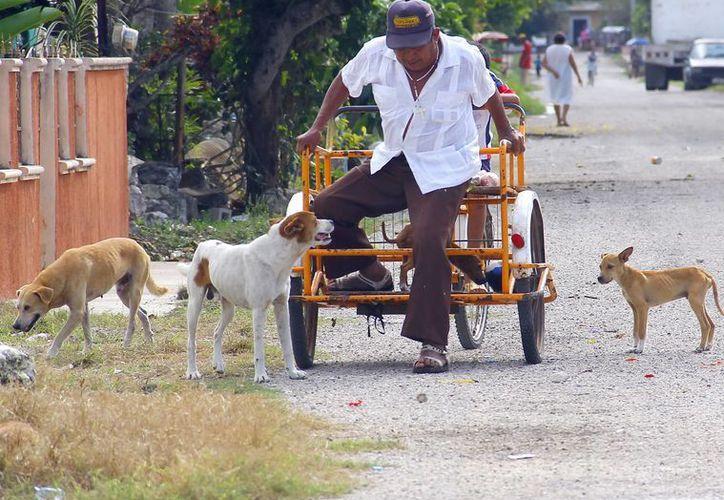 En la zona rural, muchos perros deambulan en las calles. (Milenio Novedades)