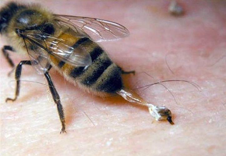 Los piquetes de insectos, entre los que más generan alergias a los yucatecos. (Milenio Novedades)