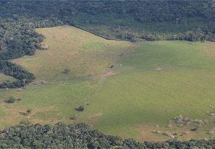 Datos oficiales señalan un aumento del 29 por ciento de la superficie deforestada en el Amazonas con respecto al año pasado. (El Tiempo)