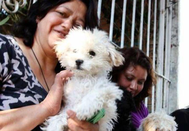 La propuesta animal del PVEM será presentada el 15 de marzo al gobierno del DF. (Notimex/Foto de contexto)