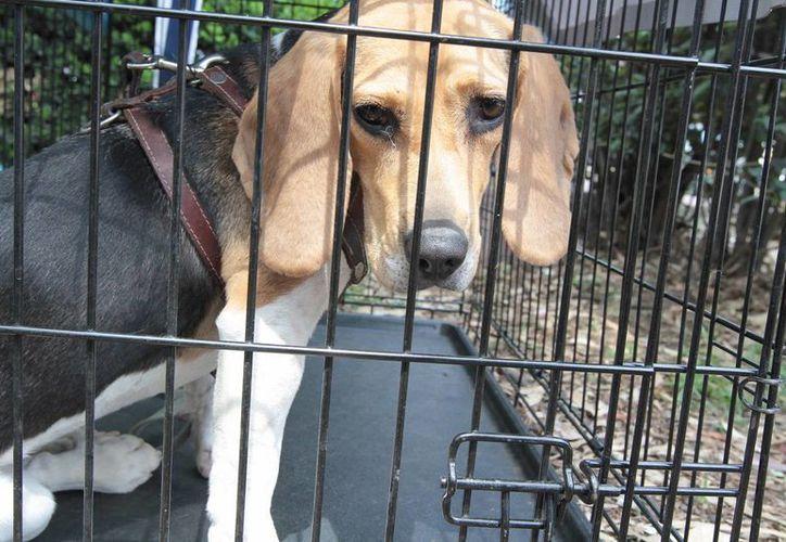 Los animales en situación de calle y los que no tienen el mismo problema de alimento en Venezuela. (Archivo/Notimex)