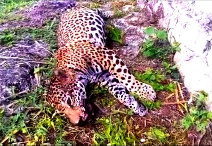 Este nuevo caso fue documentado en video. (Daniel Pacheco/SIPSE)