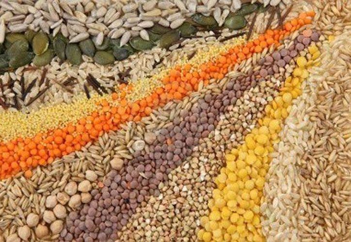 Tiene como objetivo fundamental la conservación de material genético en cualquiera de sus formas reproductivas sean semillas, esquejes y tubérculos. (campusmexico.mx/)
