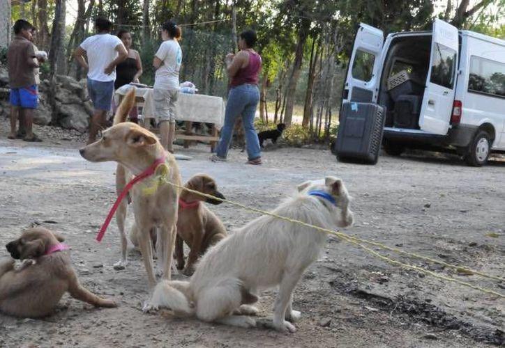 Se necesita que los dueños tomen conciencia sobre la necesidad de procurarles alimentación, llevarlos al veterinario, garantizarles seguridad. (Archivo/SIPSE)