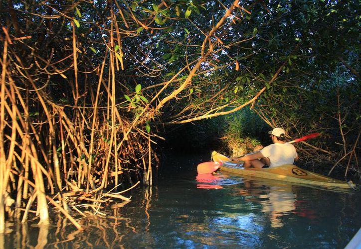 Llamado a que yucatecos conozcan su patrimonio ecológico. (Foto: Milenio Novedades)
