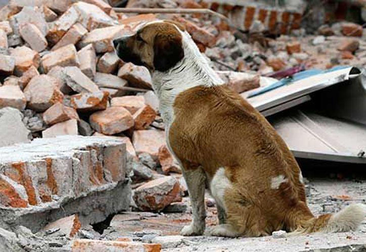 Se instaló un centro de acopio donde las personas donaron alimento para las mascotas afectadas. (Foto: Contexto/Internet)