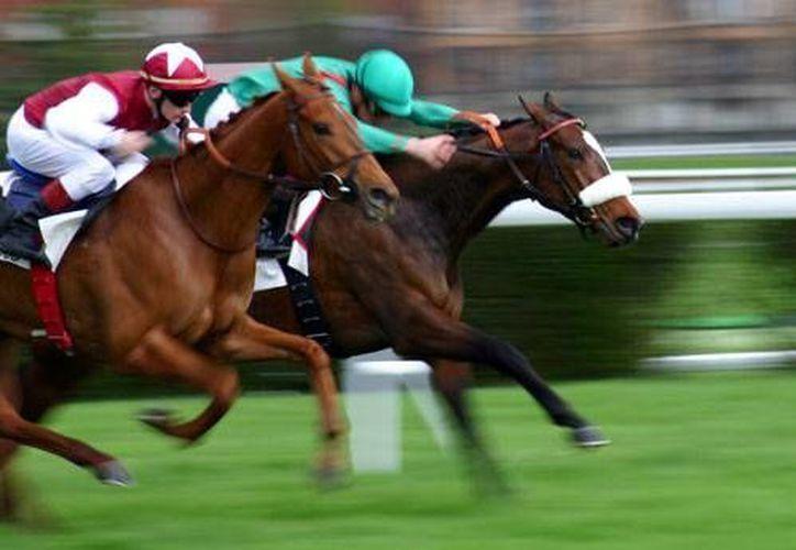 Mientras en España matan caballos pura sangre, en México lo que 'mueren' son las carreras. (.turiguide.com/Archivo)