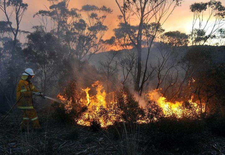 Al menos 15 incendios siguen ardiendo fuera de control. (Agencias)