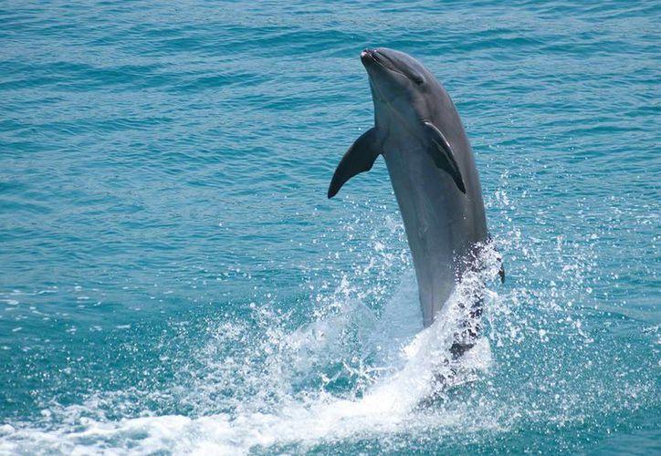 El lugar identificado para la creación del refugio para delfines enfermos será un área natural que ya está protegida. (Archivo/Agencias)