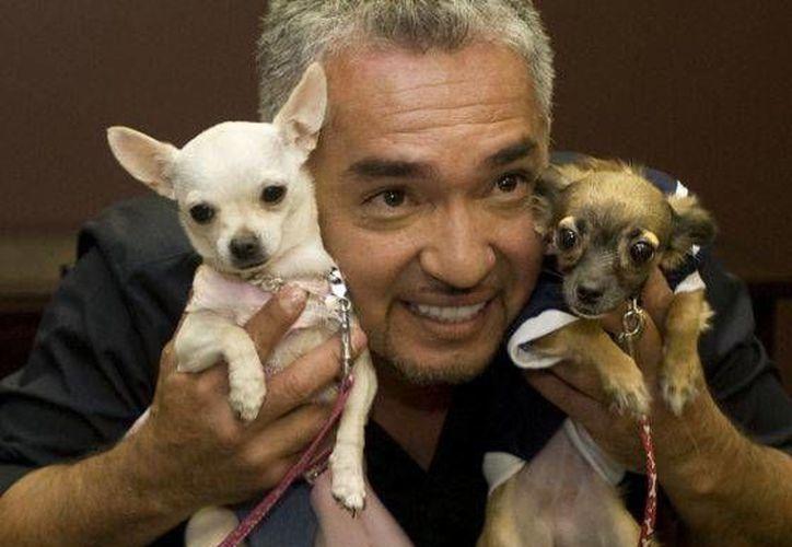 """El show de """"El encantador de perros"""" se presentará en tres ciudades de México. (fanpop.com)"""