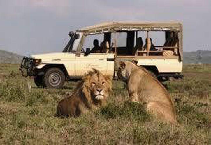 Autoridades de Kenia consideran que lo leones podrían estar en la ciudad. (felicesvacaciones.es)