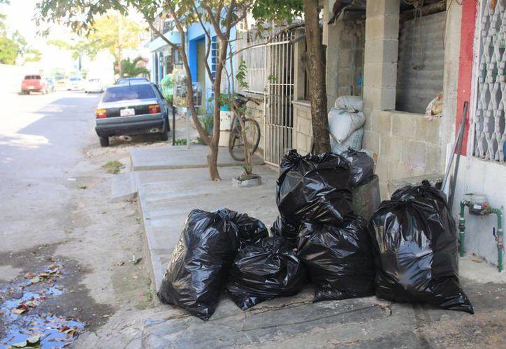 El problema persiste en la colonia Jardines, sitio que luce abandonado por el municipio. (Ernesto Neveu/SIPSE)