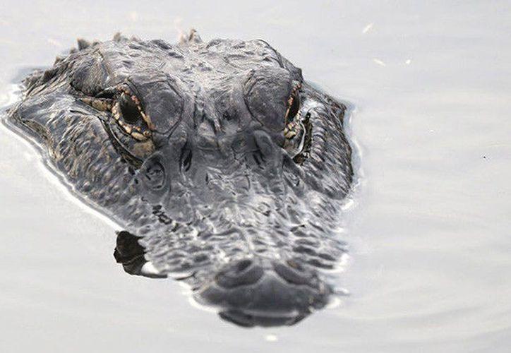 Los restos fueron localizados este miércoles en un área pantanosa a unos once kilómetros al oeste de la ciudad de Homestead, en Florida. (RT)