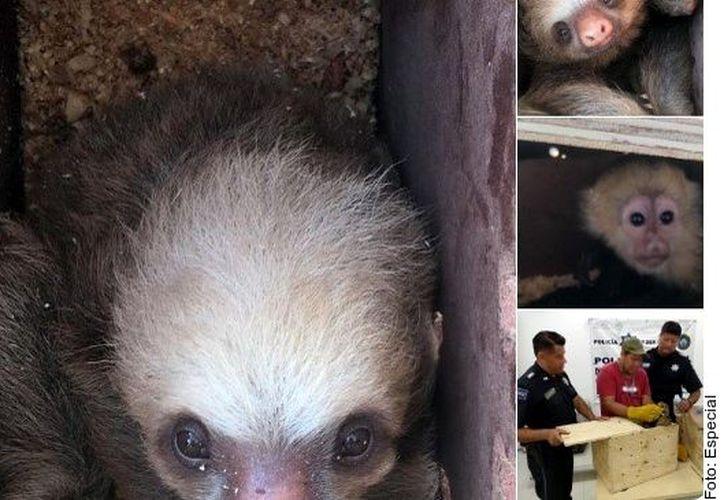 Estos fueron los ejemplares que la asociación animalista acusó a las autoridades federales de asesinar tras su rescate en Chiapas. (Agencia Reforma)