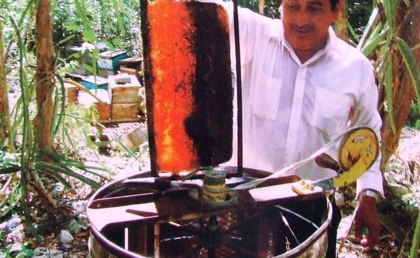 Son unos 250 apicultores que están sufriendo las consecuencias de la sequía. (Rossy López/SIPSE)