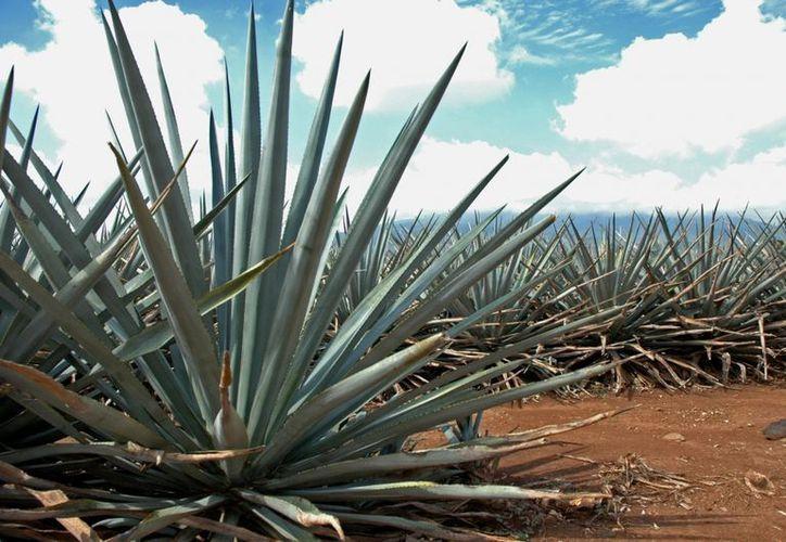 """El líder de la Canacintra dice que con el """"Tequila Mart"""" se fortalecería el mercado interno. (Internet)"""