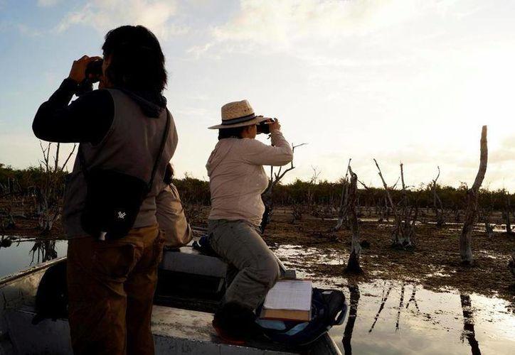 Se ha detectado que varias especies que residen en el Área de Protección de Flora y Fauna Isla de Cozumel viajan diariamente hasta Punta Sur. (Irving Canul/SIPSE)