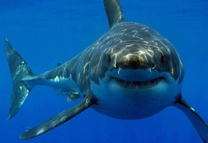 El megalodón o tiburón grande sí existió en la prehistoria, pero la cadena juega con la incredulidad humana. (Agencias)