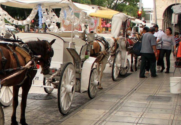 Los caballos de las calesas requieren una mejor atención aunque no haya denuncias por maltrato. (SIPSE)