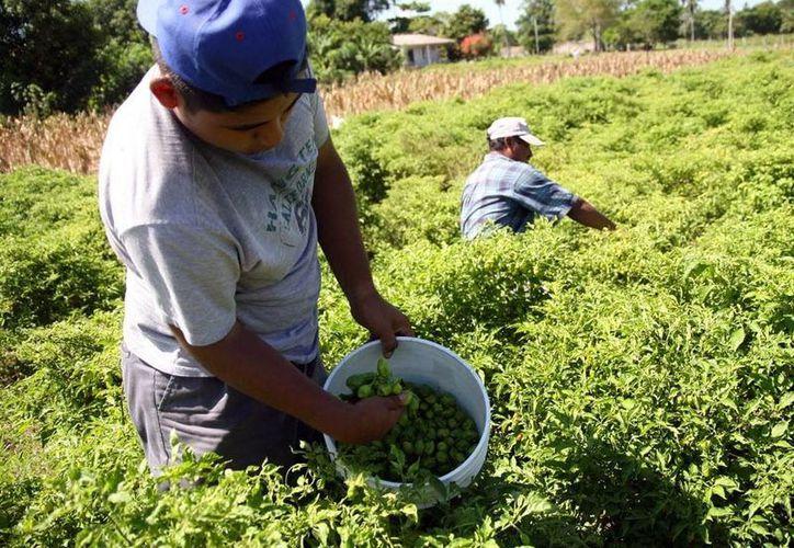 La Cruzada Nacional contra el Hambre beneficia a mas de 100 mil yucatecos. (Milenio Novedades)
