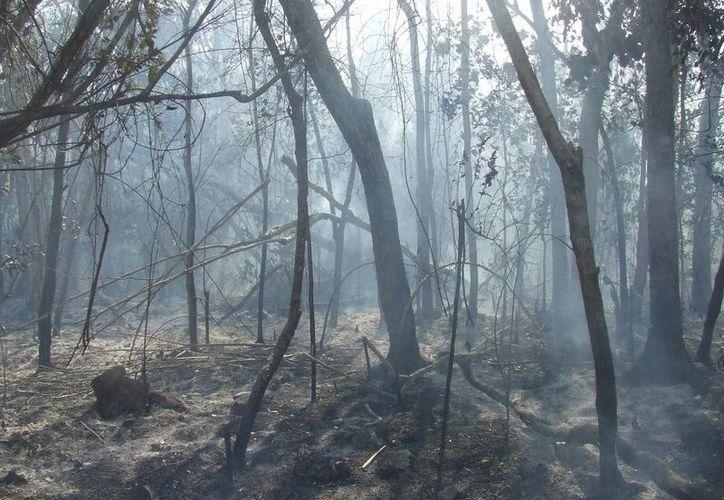 Se espera que esta semana se instale el comité de prevención de incendios forestales en Tulum. (Rossy López/SIPSE)