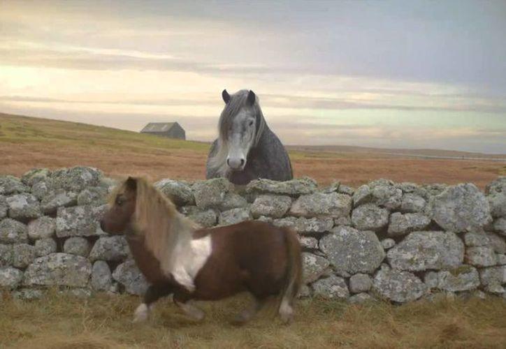 El pony bailarín de las planicies de Escocia. (Facebook)