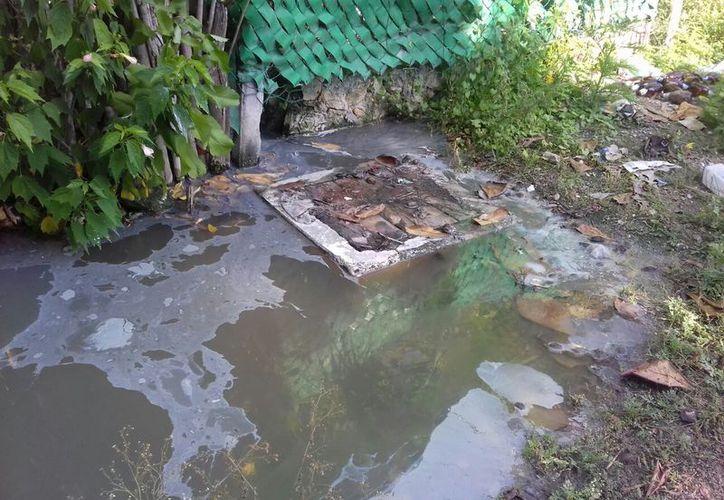 Las aguas residuales salían de los baños y de los lavabos de las casas, poniendo en riesgo la salud de las familias. (Carlos Castillo/SIPSE)