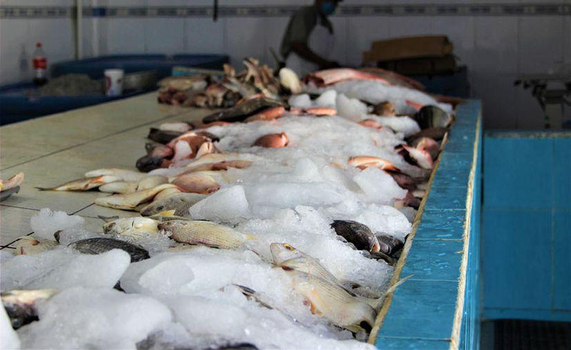 Recomiendan a establecimientos evitar la adquisición y venta de picuda o barracuda. (Foto: David de la Fuente)