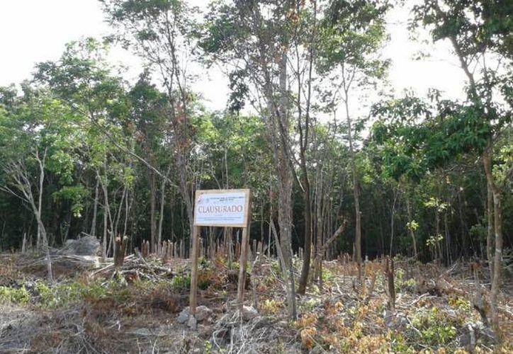 El Banco Mundial apoya los trabajos enfocados a evitar la degradación de los ecosistemas en Yucatán. (Foto de contexto de SIPSE)