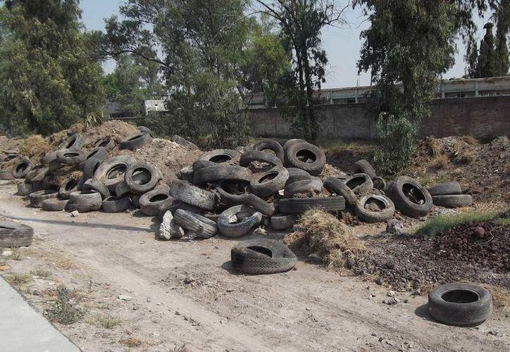 Las tiran en basureros clandestinos y son criaderos de moscos. (Carlos Castillo/SIPSE)