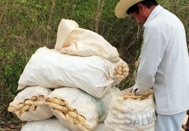 Los productores del campo pueden obtener distintos apoyos. (Milenio Novedades)