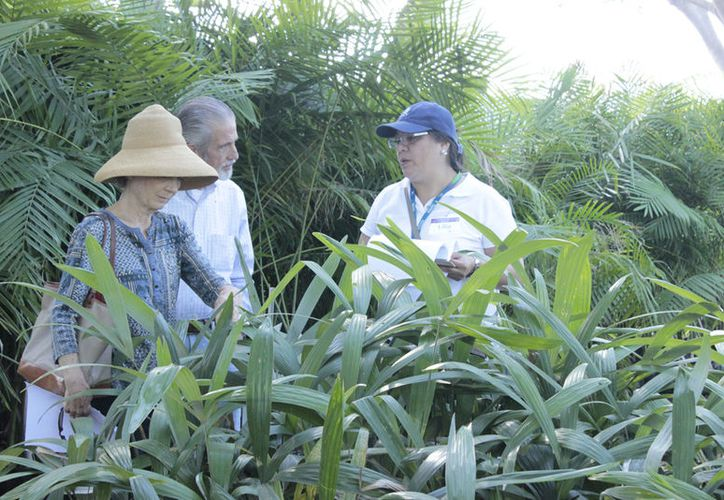 El Laboratorio GeMBio ofrece asesoría a productores sobre el manejo de plantas y enfermedades en sus cultivos. (Milenio Novedades)