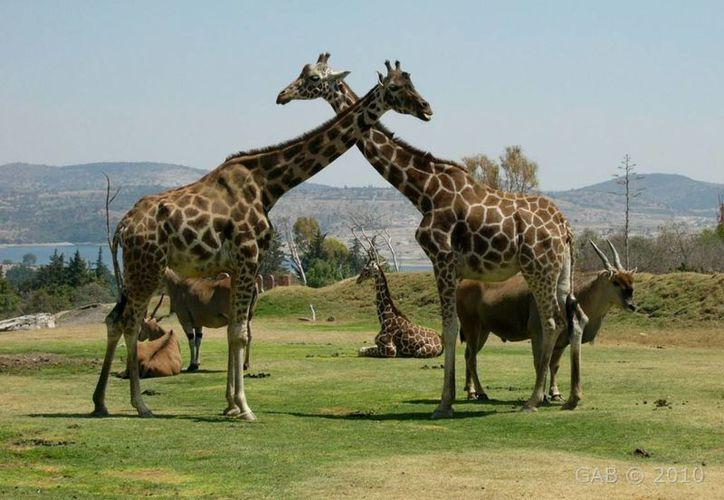 El parque zoológico de Valsequillo, en Puebla, es visitado cada año por más de un millón de personas. (expedicionmexico.net)