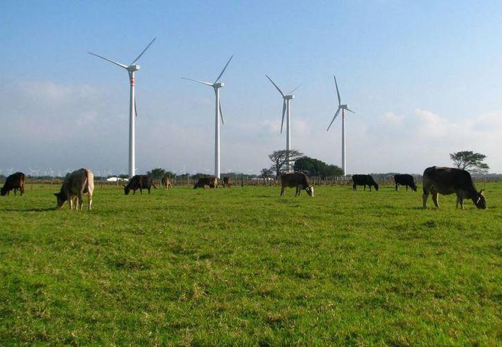 Un grupo de comuneros se opone al proyecto de inversión para la construcción del parque eólico. (ecoclimatico.com)