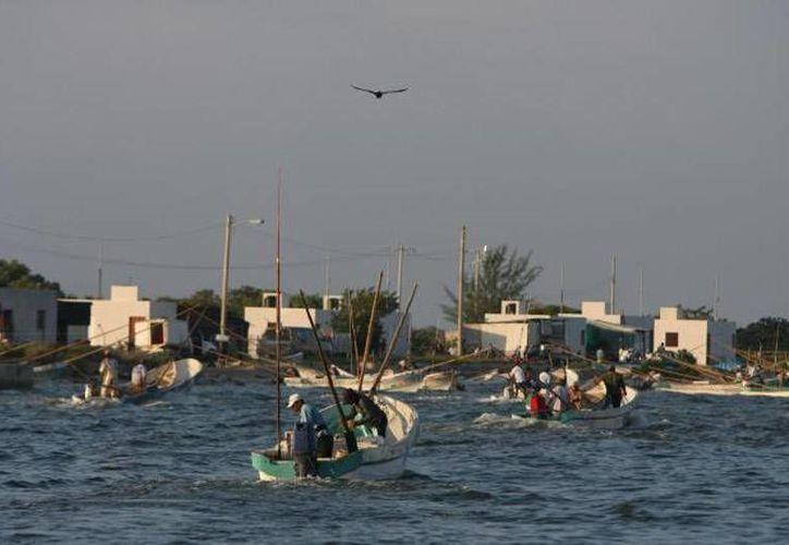 Se busca que el pulpo que se pesca en mares de Yucatán y Campeche tenga denominación de origen. En la imagen, pulperos salen en busca del precisado molusco. (Archivo/SIPSE.com)