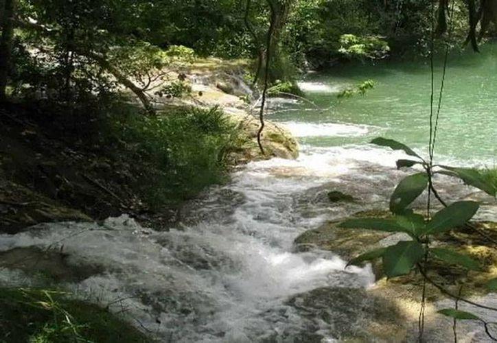 Bala´an K´aax en una zona natural de Quintana Roo, que fue incorporada al sistema de áreas protegidas. (Imagen tomada de internet)