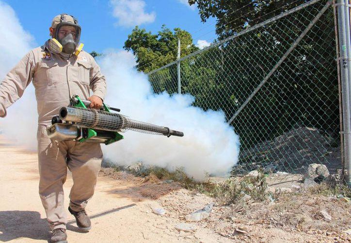 Esta semana se han incrementado la abatización y fumigación en Solidaridad evitar la proliferación del mosquito Aedes Aegypti.  (Adrián Barreto/SIPSE)