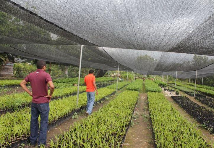 La Amosur buscará enfocarse en diversas actividades, entre estas el uso agropecuario del suelo. (Edgardo Rodríguez/SIPSE)