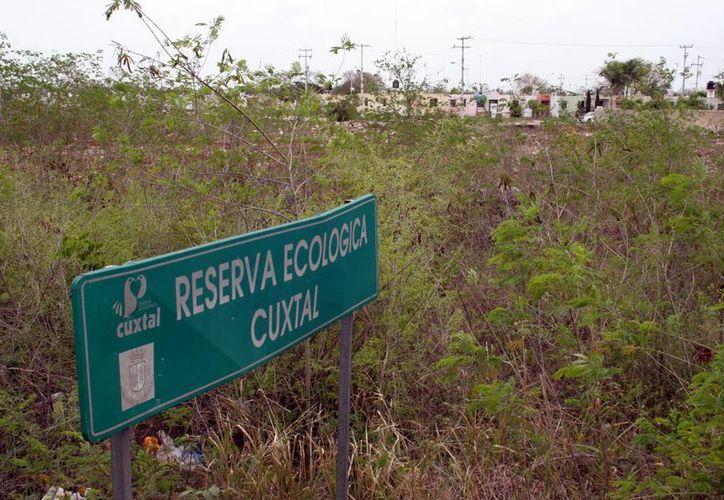 Reservas como la de Cuxtal protegen la flora yucateca. (Milenio Novedades)