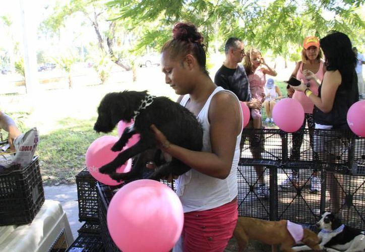 Esperan que la campaña gratuita de desparasitación de mascotas se lleve a cabo cada mes. (Foto: Contexto/SIPSE)
